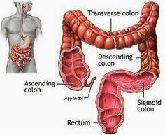 TU SALUD: Plantas medicinales para el colon