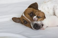 JRT mom and baby