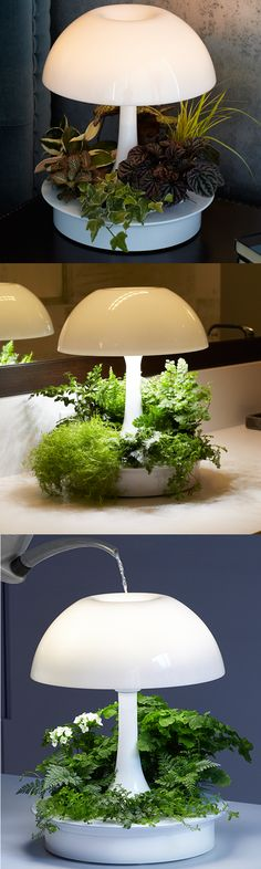 Light your space, grow plants & experience nature, all year long. Unique…