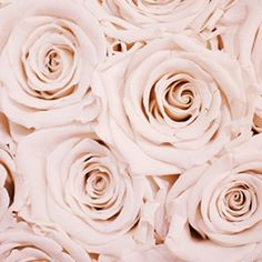 29 Romantic Roses iPhone X Wallpapers Floral Roses iPhone Wallpaper by Preppy Wallpapers. White Roses Wallpaper, Frühling Wallpaper, Spring Wallpaper, Flower Phone Wallpaper, Pink Wallpaper Iphone, Wallpaper Backgrounds, Iphone Backgrounds, Pattern Wallpaper, Pink Background Wallpapers