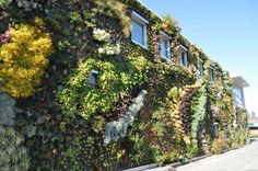 These 5 Living Walls Are Giving Us Spring Fever!