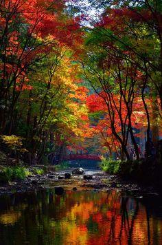 Los colores de la naturaleza | The colors of nature - #arco iris #rainbow #árboles #trees #otoño #autumn #fall #paisajes #landscapes #scenery