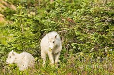 Title:  Kids In Glacier Np 3  Artist:  Natural Focal Point Photography  Medium:  Photograph - Photograph