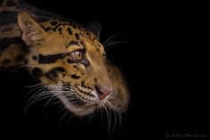 Extrasensory Perception by Ashley Vincent.
