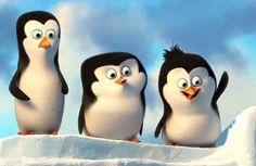 60 Ideas De Seleccion Fotos De Pinguinos Pinguinos De Madagascar Juegos De Disney Channel