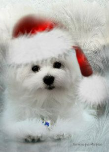 Pin By Roberts On Christmas Critters Christmas Puppy Animals