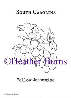South Carolina State Flower Yellow Jessamine Coloring PagesColoring