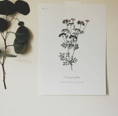 a daily something: Free Printable | Botanical Prints 02