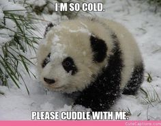 I'm So Cold., Please Cuddle with Me. | Cute Captions