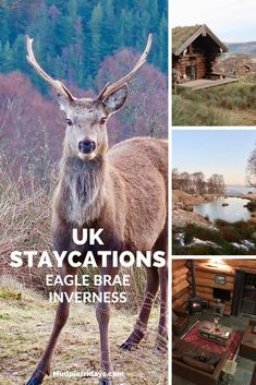 Review Eagle Brae Inverness #scotland #unitedkingdom #familytravel Uk Holidays, Holidays With Kids, Child Friendly Holidays, Ireland With Kids, Family Days Out, Holiday Resort, England And Scotland, Places To Travel, Travel Destinations