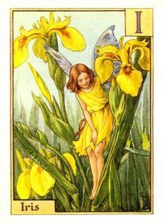 Iris Flower Fairy Alphabet Print c.1940 Fairies by Cicely Mary Barker