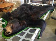 Black Bear In Good Condition   Dealer #444  $795  Lucas Street Antiques Mall 2023 Lucas Dr.  Dallas, TX 75219  Like us on Facebook: https://www.facebook.com/lucasstreetantiques?ref=hl  Loc