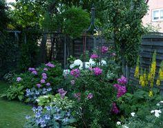 Rosen und Clematis - Clerotiker 2013 - Seite 188 - Rund um die Rose - Mein schöner Garten online