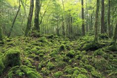 Aokigahara Forest | ZEKKEI Japan -Introduction of superb view ...