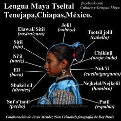 THE Tseltal or Tzeltal is a Maya anguage spoken in the state of Chiapas (Mexico) in about 17 municipalities, has approximately 370.000 speakers making it the second most spoken language in Chiapas (after Castilian) and the fifth most spoken language in nationwide. Also part of the East Branch called the Mayan languages​​.