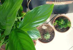 #pot #plante #DIY