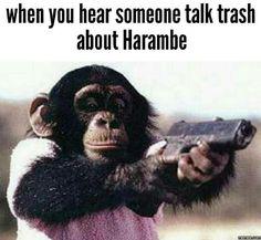 When you hear someone talk trash about Harambe... #Funny #Memespic.twitter.com/kwbIcd6Xp3 http://ibeebz.com