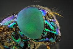 Mosca-varejeira by Jefferson Allan on 500px