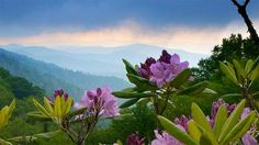 Roan Mountain, Tennessee, Usa