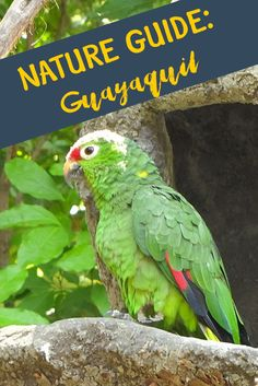 We have lived in Guayaquil, Ecuador for ten months now. Jazmin, a native Ecuadorian, has taken usaround the city to see everything it has to offer. Or so we thought. We had completed everything on the online tourist guides to Guayaquil.A quick trip to th