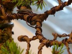 Learn How To Wire Your Bonsai Tree: Part 1 – Nursery Tree Wholesalers