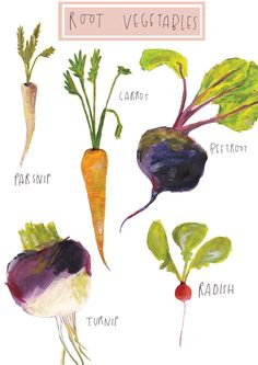 Root Vegetables. Limited Edition Illustration by Faye Bradley via Etsy...cute for a kitchen!