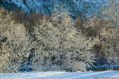 Fascinating ice crystals at Neshaugen Norway Winter, Ice Crystals, Small Places, Frost, Snow, Cold, Pictures, Photography, Outdoor