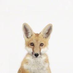 Animal Print Shop Photography – Kids Modern Nursery Decor – Wall Art with baby animals | Small for Big