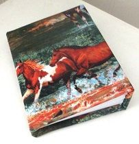 Paint horse photo album 100 4x6 photos. by PeacefullyPerfect