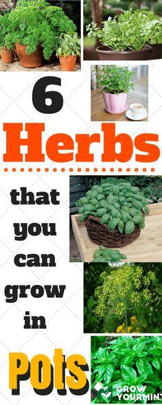 6-herbs-to-grow-in-pots