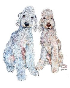 Bedlington Terrier - drawing