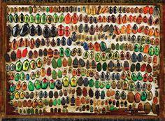 amazing collection of beetles