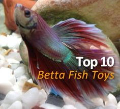 10 toys to keep your betta fish entertained in his tank. Love the look of number 4!
