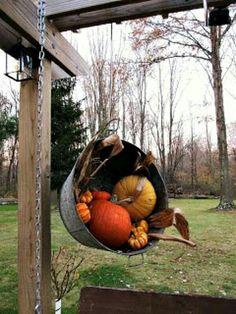 Pumpkins in bucket