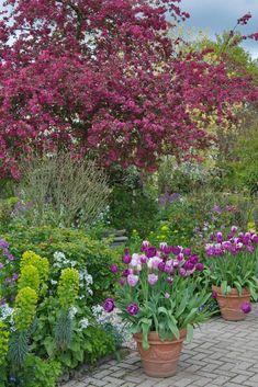 Mutter-Tochter-Garten Garden Inspiration, Gardens, Plants, Daughter, Pretty Pictures, Outdoor Gardens, Plant, Garden, House Gardens