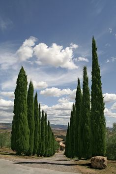 """Val D'Orcia I Val d'Orcia, Tuscany, Italy – """"Creepy Italian trees… It's like they know…"""" Places In Italy, Places To See, Italy Vacation, Italy Travel, Vacation Trips, Provence, Wonderful Places, Beautiful Places, Emilia Romagna"""