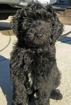 I shall name him Charlie or Benni