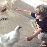 Galinhas dão os melhores abraços. | 19 razões que explicam porque galinhas na verdade são os bichos mais fofos