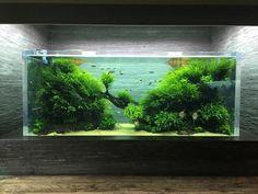 Amazing Sumida, thanks Sensei Takashi Amano for your talent, vision and legacy Aquarium Ideas, Aquarium Design, Takashi Amano, Mediums Of Art, Sustainable Farming, Tanked Aquariums, Prop Design, Aquascaping, Planted Aquarium
