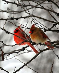 True Love.....mates for life