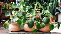 These 6 Trendy Houseplants Are About to Take Over Your Instagram Feed