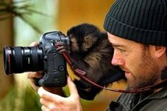 monkey and camera These are fantastic pictures!