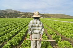 Il futuro è agricolo?