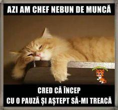 Funny Memes, Comics, Cats, Alice, Gatos, Cartoons, Cat, Kitty, Comic