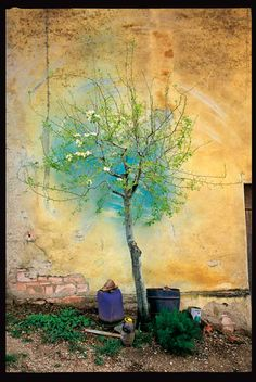 An diesem Bild, das Giuseppe vor ein paar Jahren in seinem Heimatort Montecarotto aufgenommen hat, ist nichts retuschiert oder verbessert worden. Es zeigt einen Birnbaum vor einer Mauer, an der die Weinbauern ihre Pinsel auswaschen, mit denen sie Schutzmittel auf den Weinstöcken aufbringen.