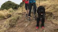 Trail Shoes, Trail Running Shoes, Dog Boots, Mountain Dogs, Badger, Outdoor Gear, Challenge, Collections, Women