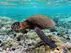 Papahānaumokuākea Marine National Monument, Pacific Ocean, Hawaii Belize Travel, Costa Rica Travel, Barbados Travel, Kenya Travel, Cap Verde, Guatemala Beaches, Mozambique Beaches, Barbados Beaches, Venezuela Beaches