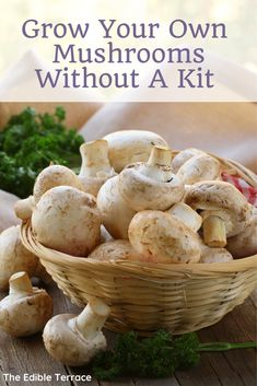 Would you like to know how to grow your own DIY mushrooms at home? You can grow them indoors, on logs, outdoors in your greenhouse, etc. For profit or simply for your family, home grown mushrooms are definitely the way to go! Growing Mushrooms Indoors, Grow Your Own Mushrooms, Growing Vegetables, Growing Plants, Garden Mushrooms, Edible Mushrooms, Stuffed Mushrooms, Gardening For Beginners, Gardening Tips
