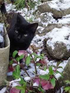 Beau chat noir dans la neige / beautiful black cat in the snow