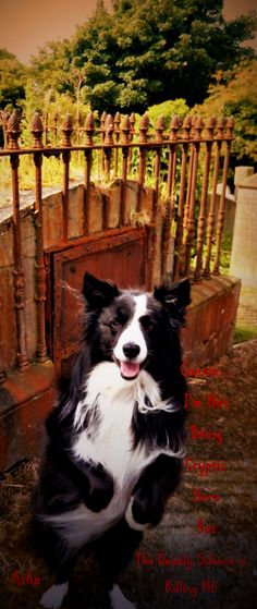 Asha at a Crypt in a Cemetery in Donaghadee County Down